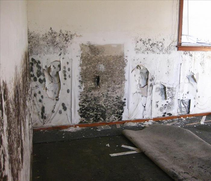 Mold Remediation Does Your Westchester County Home Have A Mold Problem?