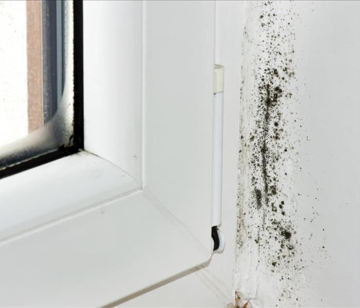 Mold Remediation Will Home Owners Insurance Cover Mold Remediation?