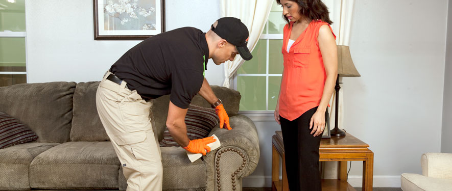 White Plains, NY carpet upholstery cleaning